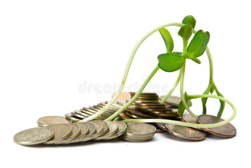 Moedas & crescimento imagem de stock royalty free