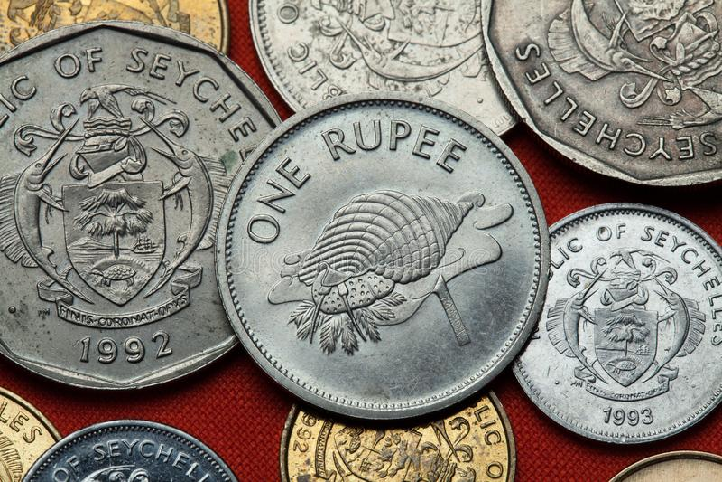 Moedas de Seychelles Tritonis de Charonia da trombeta de Triton imagem de stock royalty free