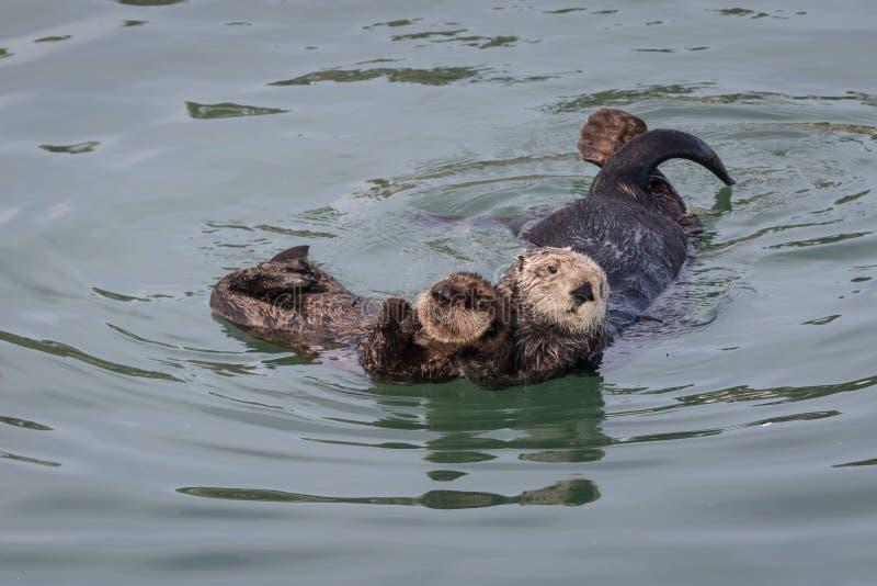 Moeder en Baby het Overzeese Otter Nestelen zich royalty-vrije stock fotografie