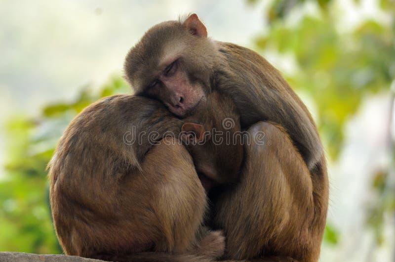Moeder en Baby Macaque - Aap royalty-vrije stock afbeeldingen