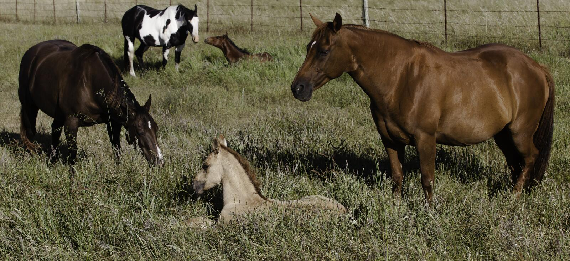 Moeder en babypaarden op gebied royalty-vrije stock foto