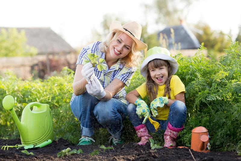 Moeder en dochter die aardbeizaailingen in de zomertijd planten stock foto's