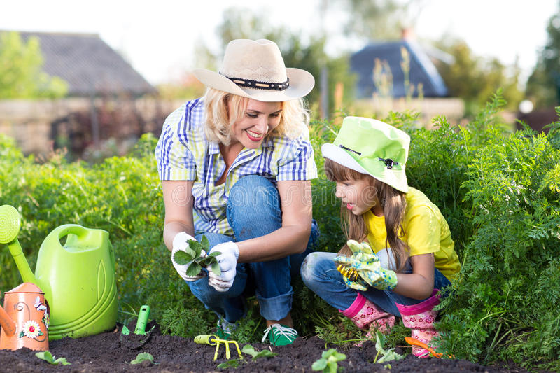 Moeder en dochterkind die aardbeizaailingen in de zomer planten royalty-vrije stock afbeeldingen