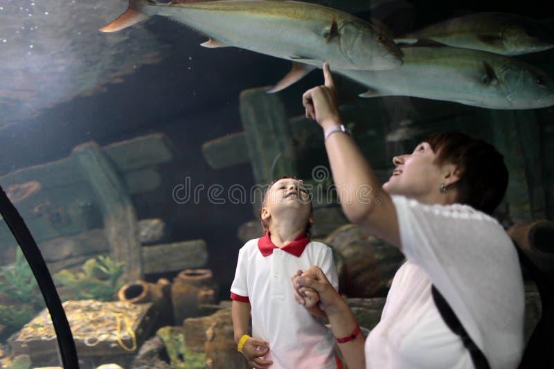 Moeder en haar zoon die op het mariene leven letten stock foto's