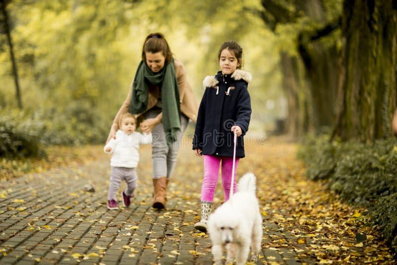 Moeder en twee meisjes die met hond in het de herfstpark lopen royalty-vrije stock foto's
