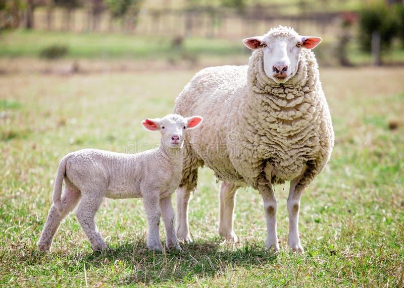 Moeder en zoon 2 stock foto