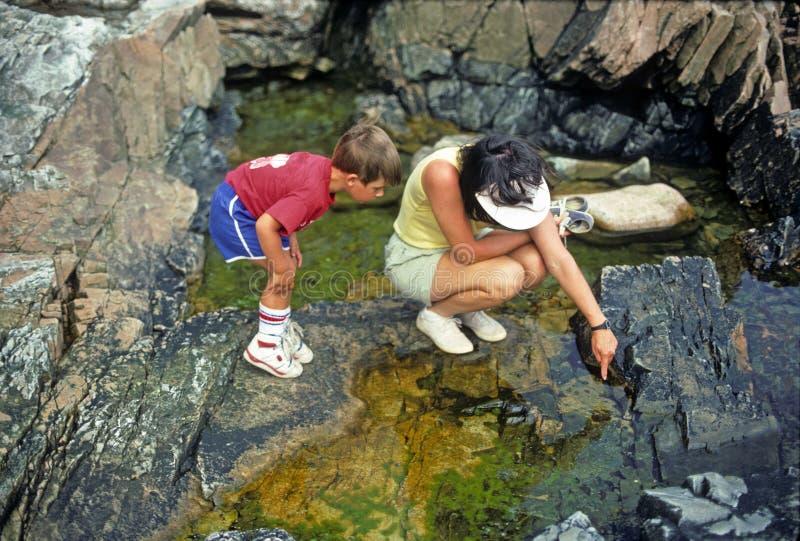 Moeder en zoon die getijdenpools bekijken stock afbeeldingen
