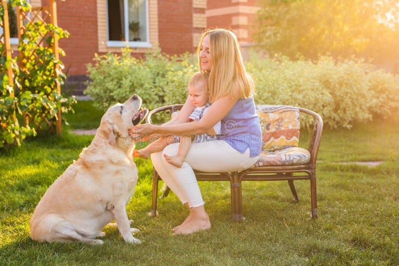 Moeder en zoon die samen pret in de zomerpark het spelen met een golden retriever hebben stock fotografie