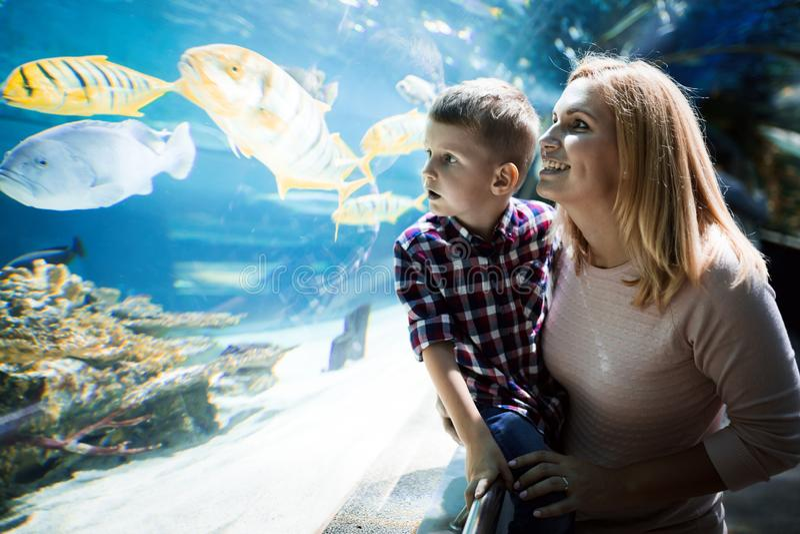 Moeder en zoons het letten op het overzeese leven in oceanarium stock foto