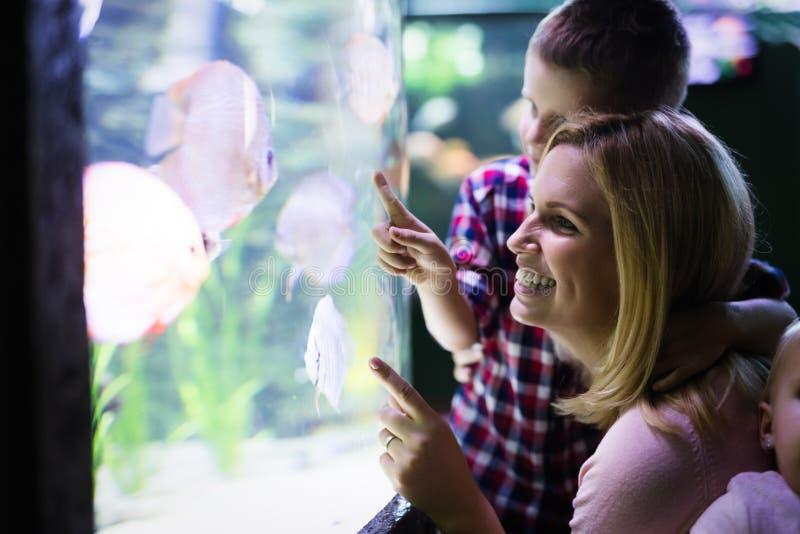 Moeder en zoons het letten op het overzeese leven in oceanarium royalty-vrije stock afbeeldingen