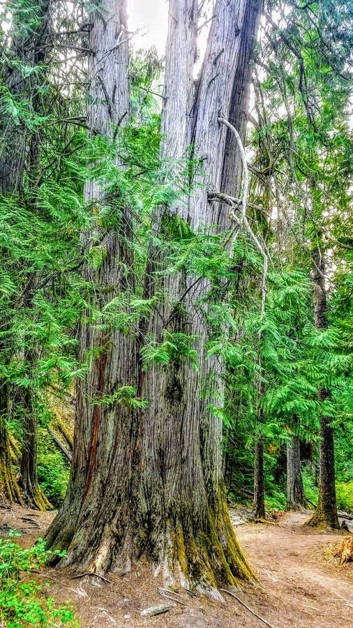 Moederboom royalty-vrije stock foto