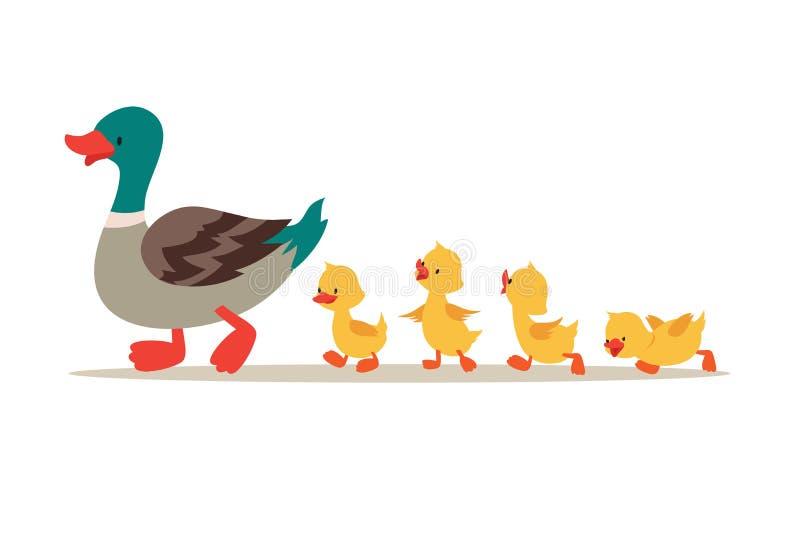 Moedereend en Eendjes Leuke babyeenden die in rij lopen De vectorillustratie van het beeldverhaal royalty-vrije illustratie