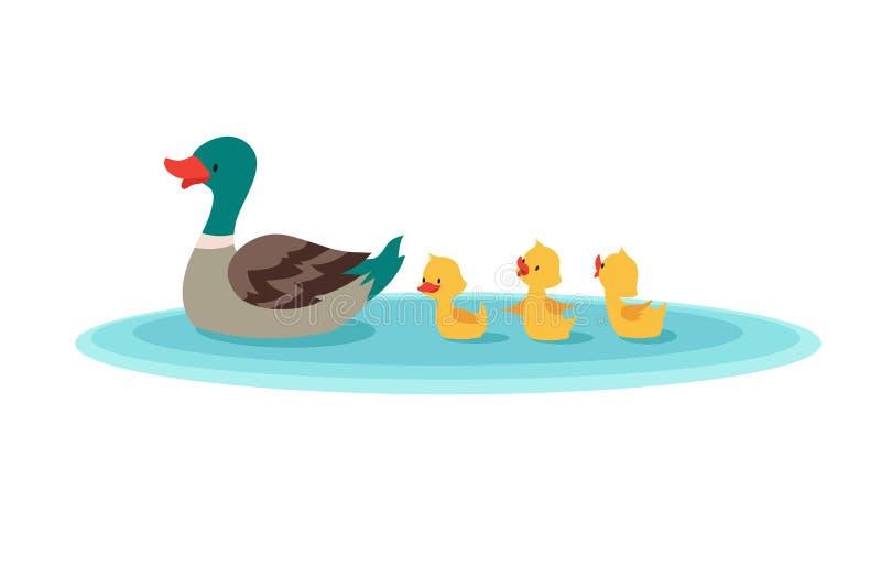 Moedereend en kleine eenden in water Eendjes die in rij zwemmen De vectorillustratie van het beeldverhaal vector illustratie