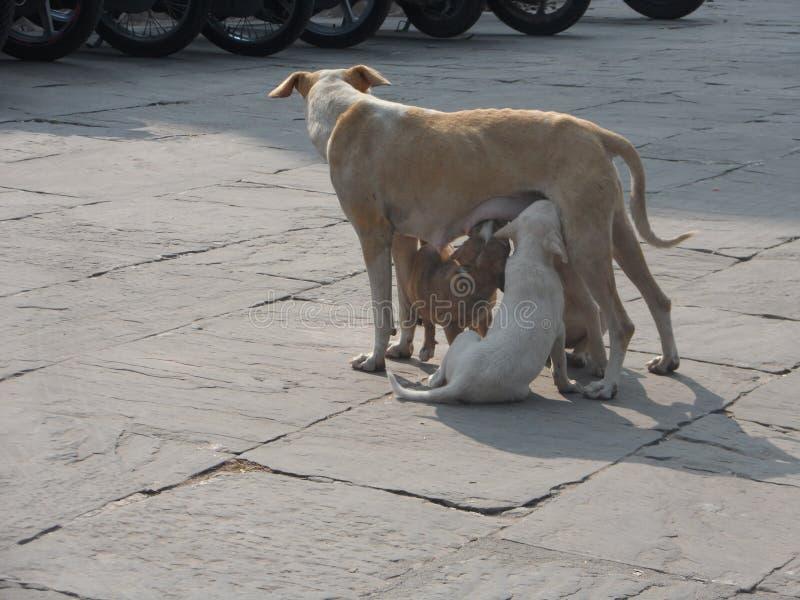 Moederhond die Hun Puppy voeden royalty-vrije stock foto