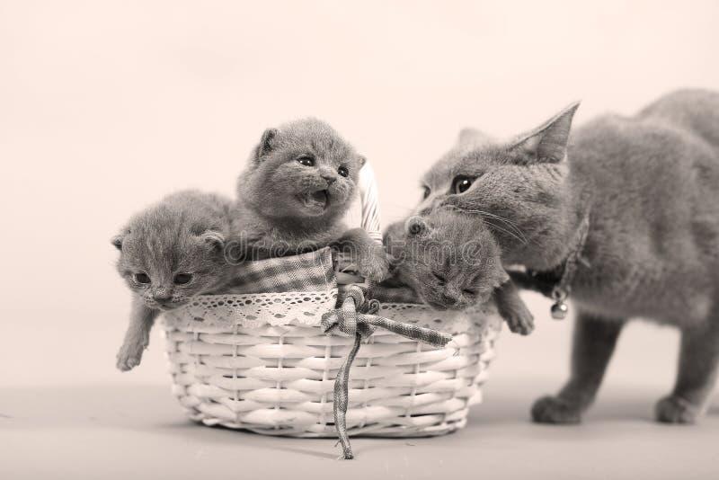 Moederkat met haar baby royalty-vrije stock afbeeldingen