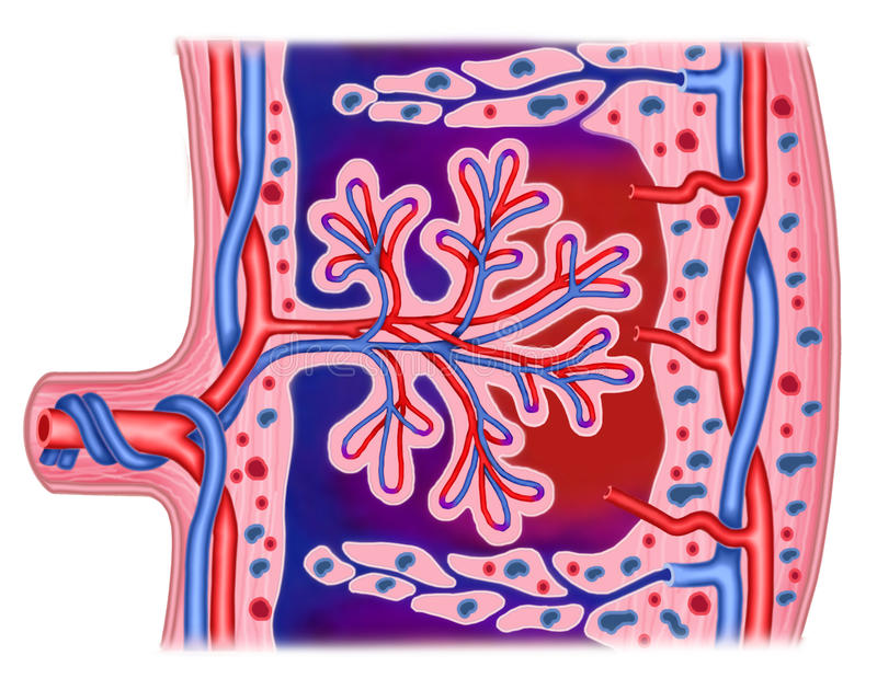 Moederkoek vector illustratie