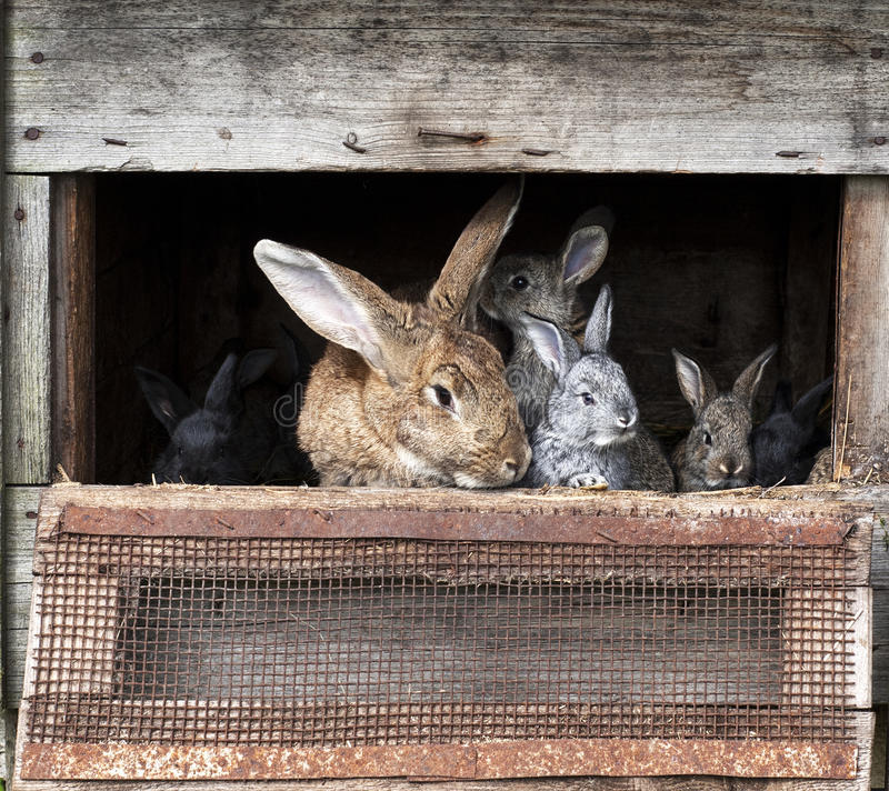 Moederkonijn met pasgeboren konijntjes stock foto
