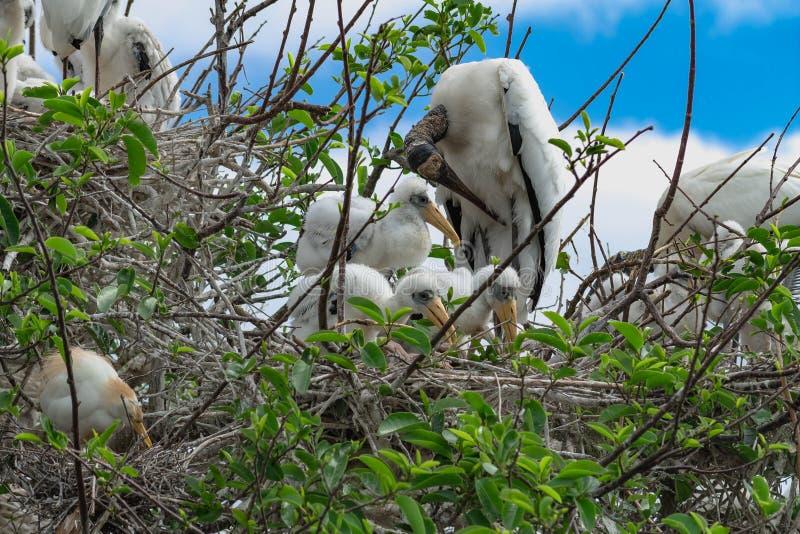 Moedervogel en haar nieuwe babys stock afbeeldingen