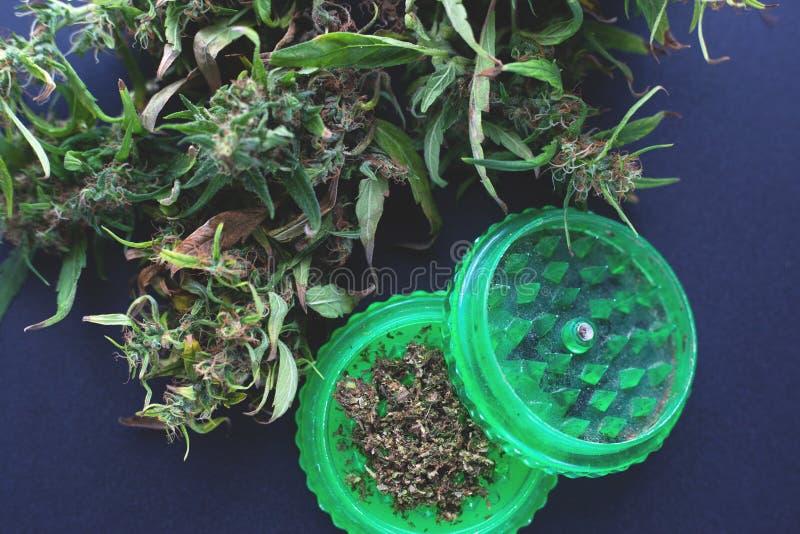 Moedor verde para a marijuana de moedura, cannabis cortado fresco foto de stock