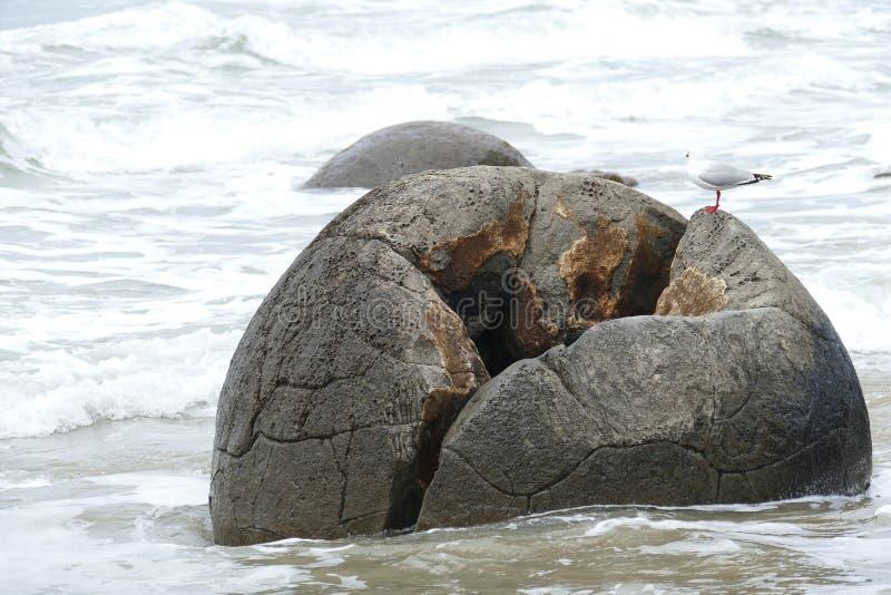 Moeraki stenblock i havet av Nya Zeeland royaltyfri fotografi