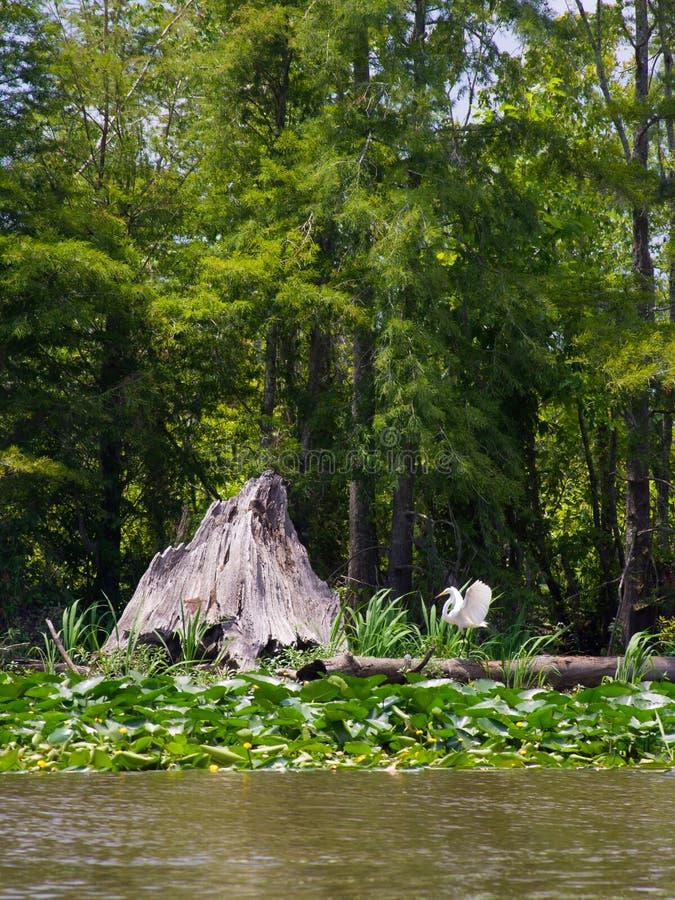 Moeras of bayou stock foto's