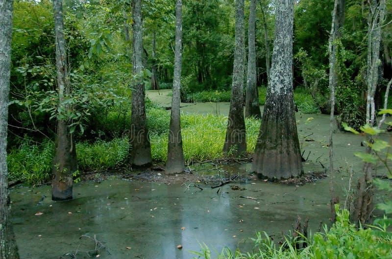 Moeras bij Tickfaw-het Park van de Staat royalty-vrije stock afbeeldingen