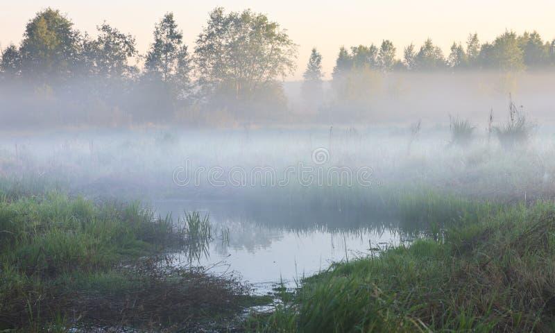 Moeras in de mist royalty-vrije stock afbeeldingen