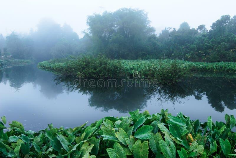 Moeras in mist royalty-vrije stock afbeelding