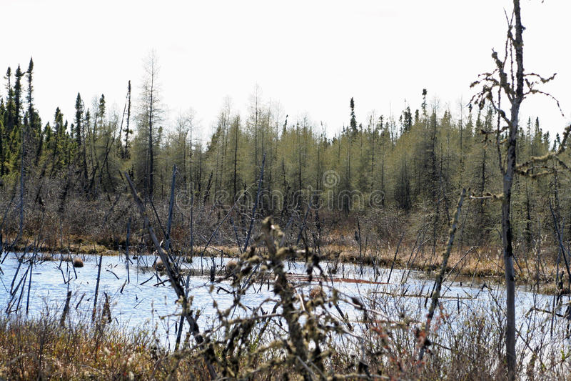 Moeras in Noord-Saskatchewan stock foto