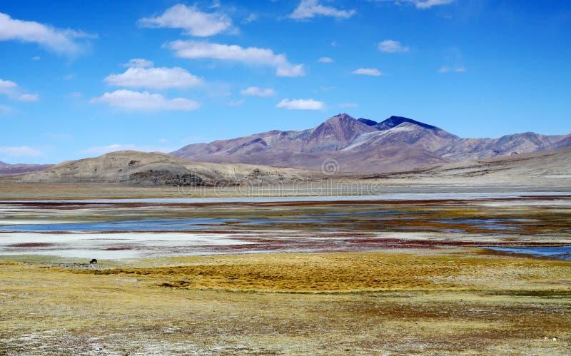 Moeras in Tibet royalty-vrije stock foto's