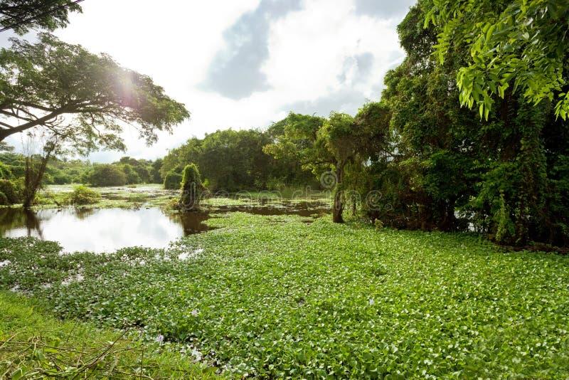 Moeras van Chilaw, Sri Lanka royalty-vrije stock foto's