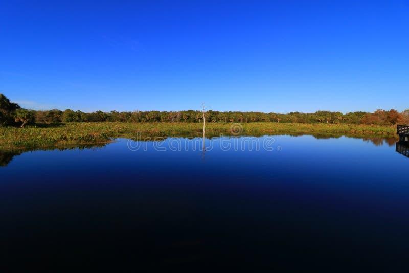 moerasland royalty-vrije stock afbeelding