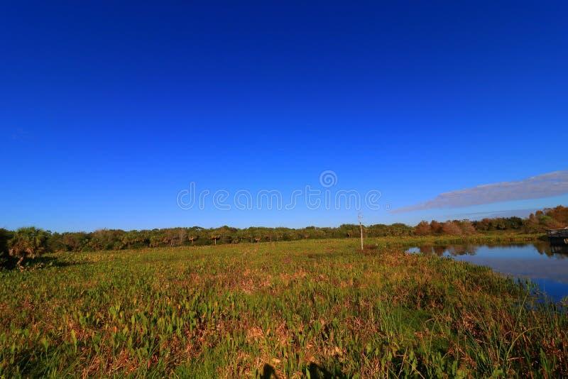 moerasland royalty-vrije stock afbeeldingen