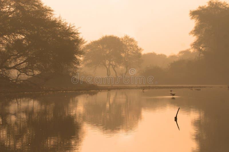 Moerasland bij dageraad stock fotografie