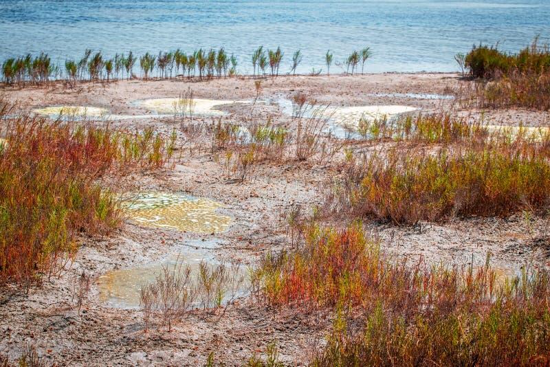 Moerasland dichtbij zout meer stock foto