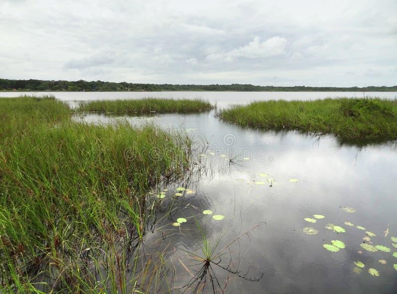 Download Moerasland rond Coba stock foto. Afbeelding bestaande uit water - 39109160
