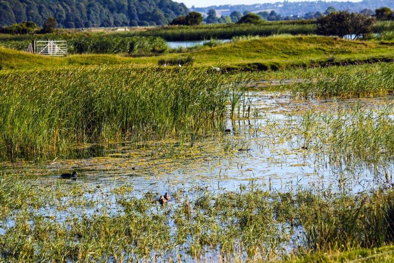 Moeraslandpanorama het Oost- van Sussex stock fotografie