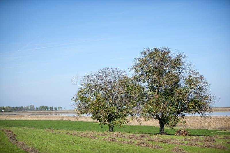 Moeraslandschap, Carska Bara dichtbij aan Zrenjanin Servië royalty-vrije stock foto's