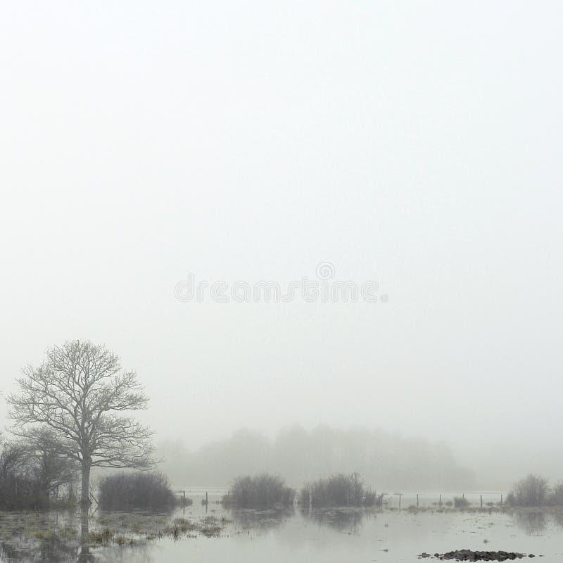 Moeraslandschap onder de mist in de winter stock foto's