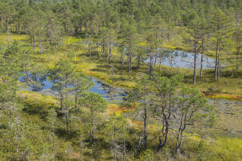 Moerassen in het Nationale Park van Lahemaa royalty-vrije stock afbeelding