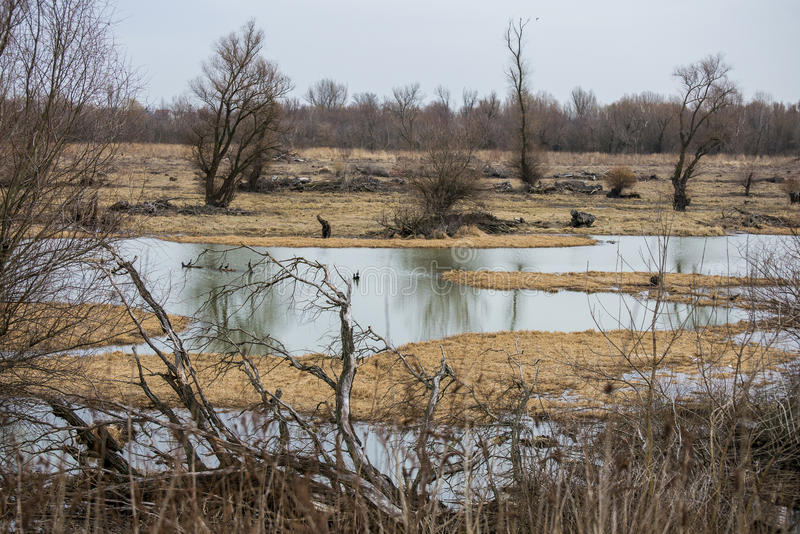 Moerassig terrein door de rivier stock afbeeldingen