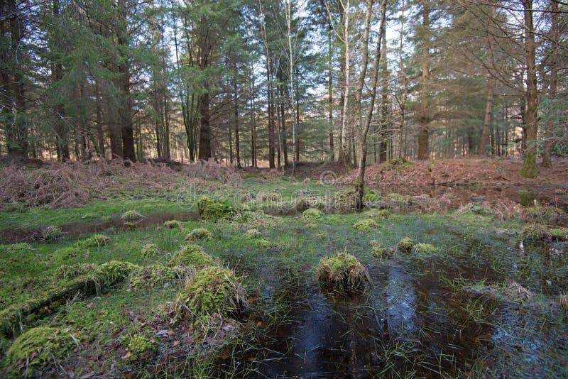 Moerassige pool in het Nieuwe Bos, Hampshire, Engeland royalty-vrije stock afbeeldingen