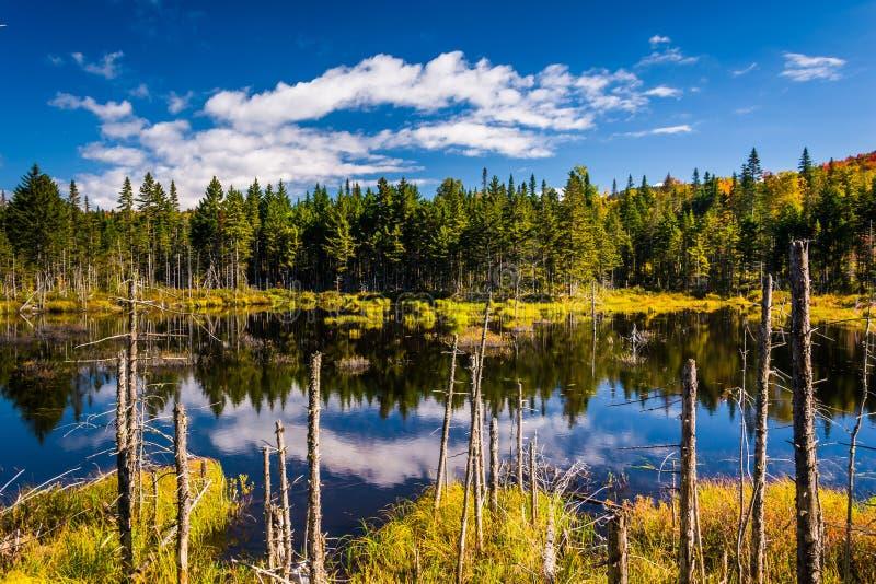 Moerassige vijver in Wit Berg Nationaal Bos, New Hampshire stock afbeelding