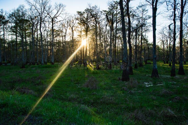 Moerassige zonsondergang in het zuiden royalty-vrije stock foto