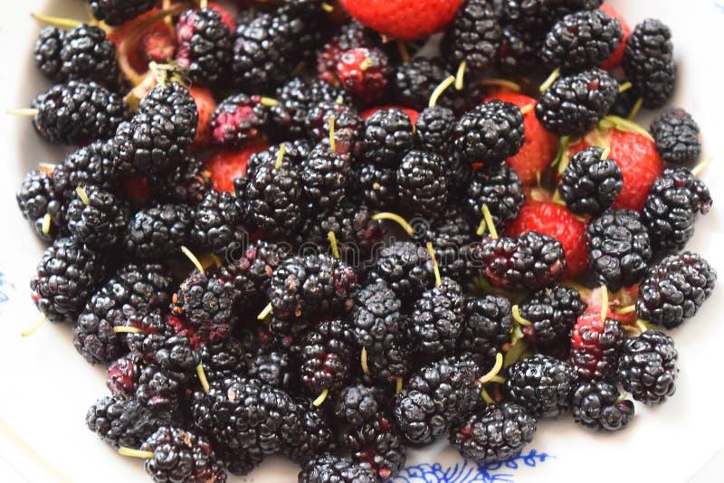 Moerbeiboom met aardbeien op een plaat Macrofruit stock foto
