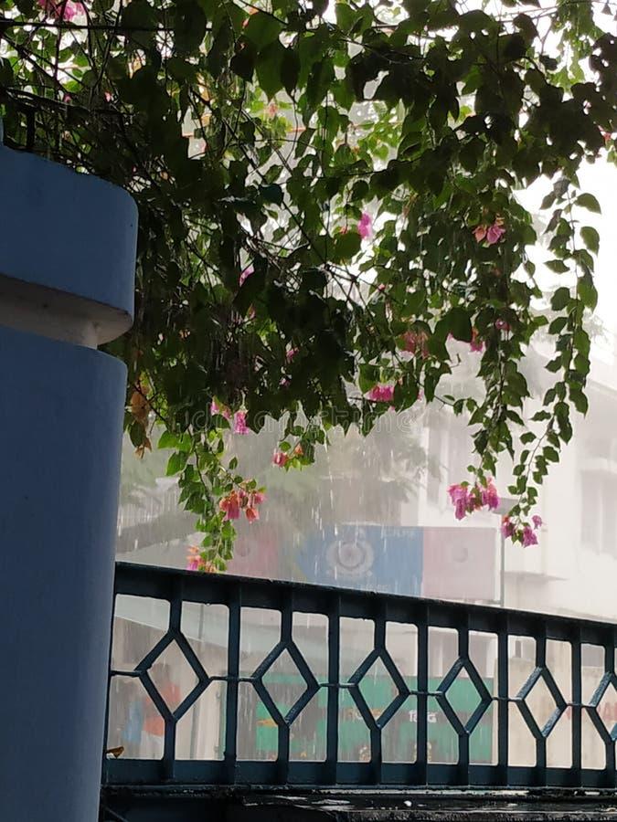 Moessonseizoen in India, zachte regenval, mooi seizoen stock foto