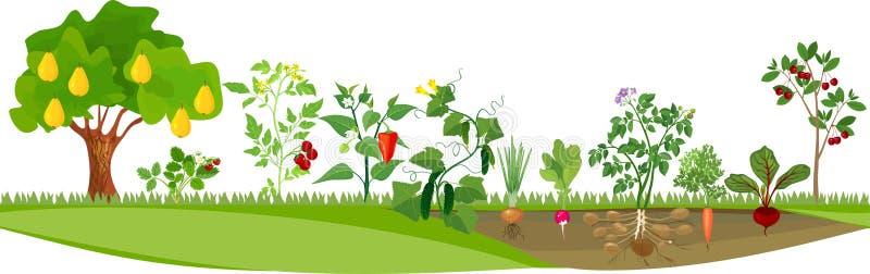 Moestuin of moestuin met verschillende groenten en fruitbomen stock illustratie
