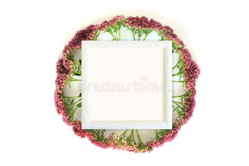 Mofa floral para arriba foto de archivo libre de regalías