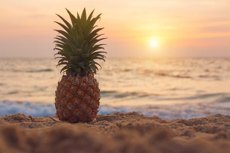 Mogen ananas på den tropiska stranden på solnedgången Semester- och sommarhelger utomhus- rekreation för lunch Vitaminer mat och  arkivbilder