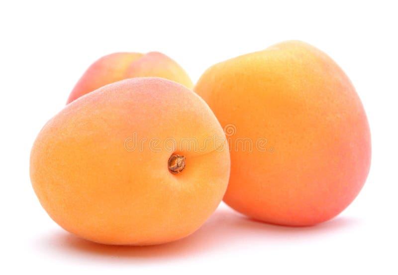 Mogen aprikos i closeup fotografering för bildbyråer